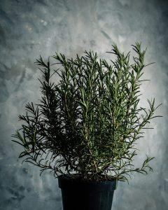 Rosemary Eucalyptus Stress Spray image 240x300 - Rosemary-Eucalyptus-Stress-Spray-image