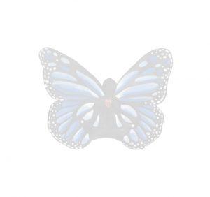 faded butterfly 300x282 - faded-butterfly