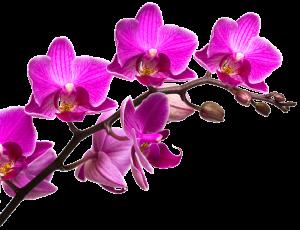 flower image2 300x230 - flower-image2